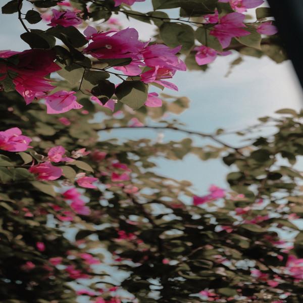 Hoa,cỏ,lá,cành ?
