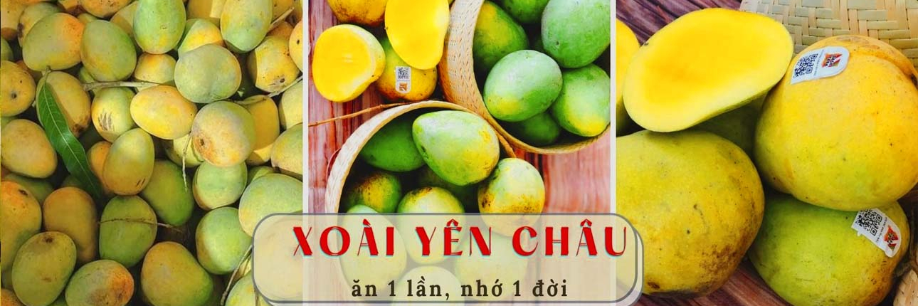 https://gody.vn/blog/giangvansp27435/post/di-hai-xoai-yen-chau-8593