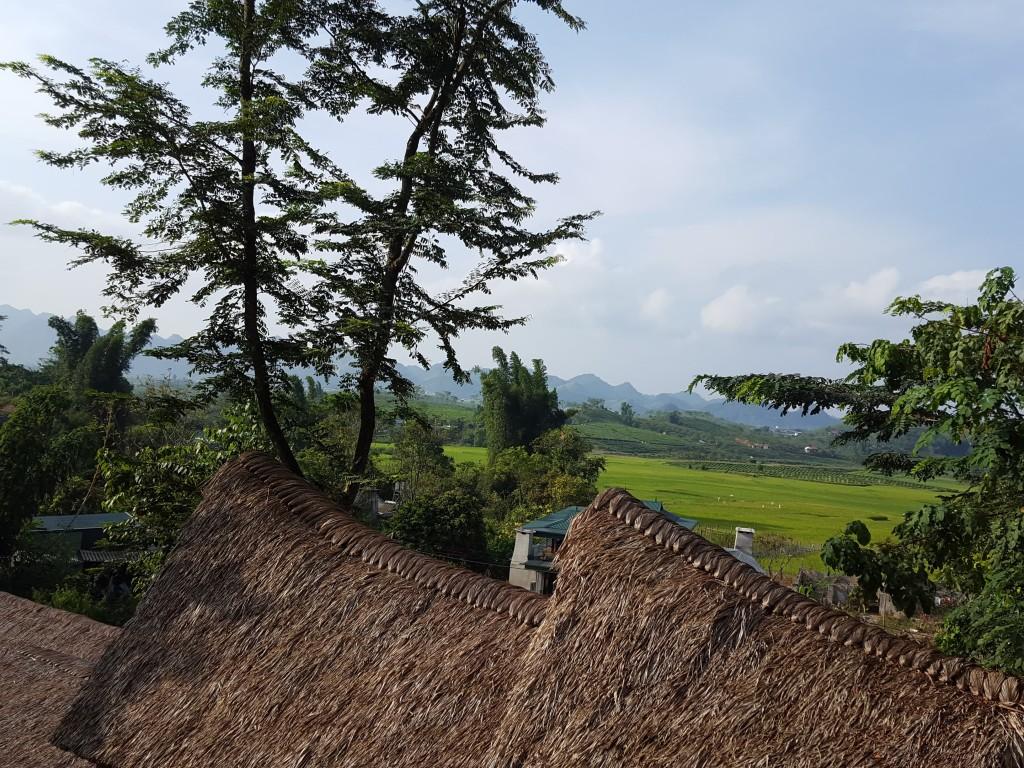 Đồng lúa chiềng Đi nhìn từ Mộc Châu Retreat