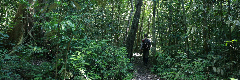 https://gody.vn/blog/steve9476/post/rung-goi-forest-callings-4086