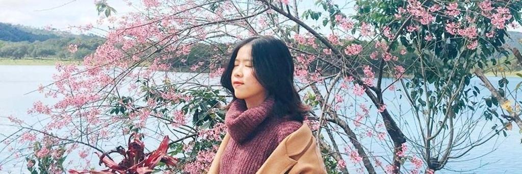 https://gody.vn/blog/sakura9651/post/kinh-nghiem-san-hoa-mai-anh-dao-da-lat-2368