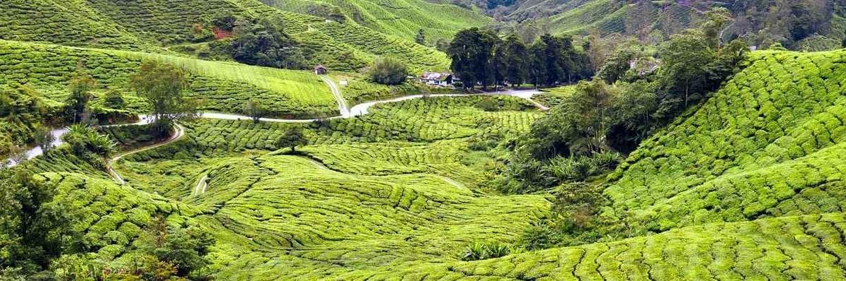 https://gody.vn/blog/quynhchi191020164143/post/mung-08-thang-03-nay-cung-nguoi-ay-kham-pha-cao-nguyen-cameron-xinh-dep-o-malaysia-6361