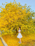 Mai vàng - Đồng Nai
