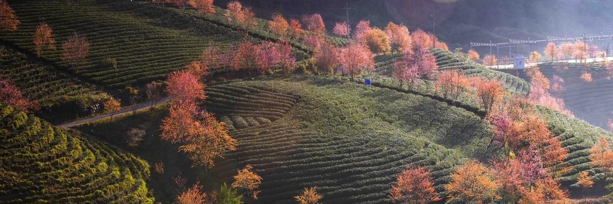 https://gody.vn/blog/thienthunguyen/post/ngo-ngang-doi-che-olong-o-sapa-thang-12-nay-2116