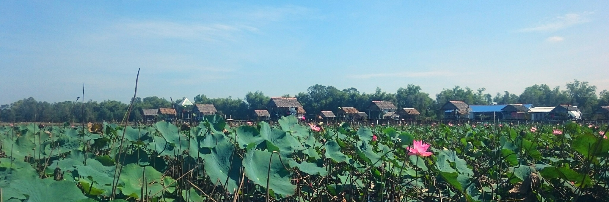 https://gody.vn/blog/trhgvhung.fa1924/post/vietnamsolo-thap-muoi-bat-ngat-sen-hong-967