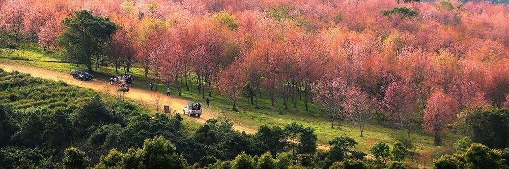 https://gody.vn/blog/tvstlphotography5863/post/nhung-diem-ngam-hoa-anh-dao-bi-mat-tai-thai-lan-3945