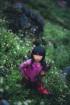 Hà Giang dưới những tán cây