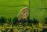 Làng trồng Cói - Vũng Liêm - Vĩnh Long