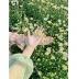 Hoa cúc hoạ mi