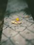 LANG THANG - Tìm góc bình yên giữa chốn ồn ào