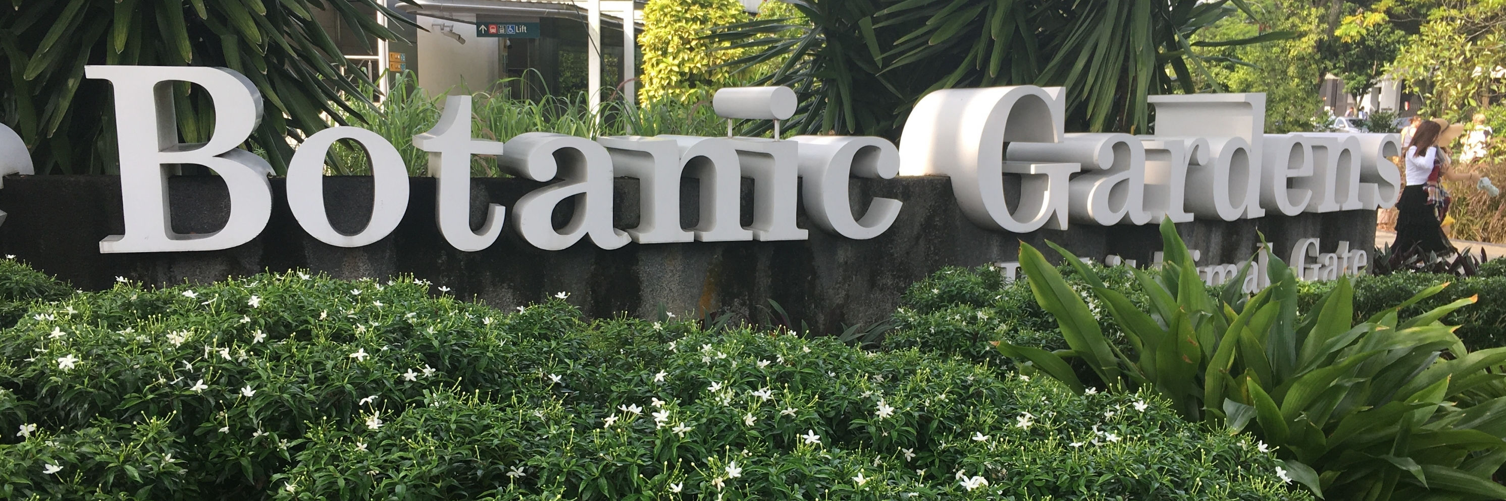 https://gody.vn/blog/flowerhanh4475/post/kinh-nghiem-di-vuon-bach-thao-botanic-gardens-singapore-4697