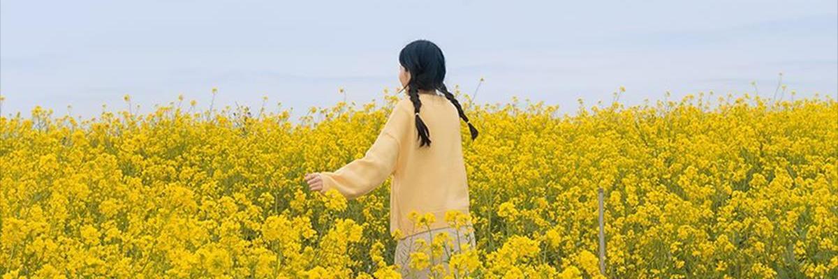 https://gody.vn/blog/vanloc7437/post/cam-nang-du-lich-dao-jeju-han-quoc-an-gi-o-dau-tham-quan-gi-5780