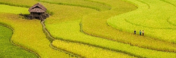 https://gody.vn/blog/litcheetravel2865/post/tour-du-lich-mu-cang-chai-3-ngay-2-dem-gia-re-4531