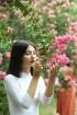 Con đường hoa tường vi đẹp nhất Hà Nội