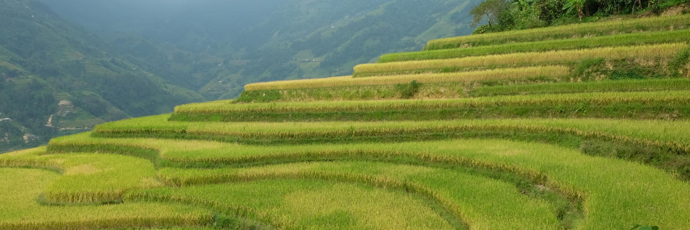 https://gody.vn/blog/ngohang4894244/post/don-mua-lua-chin-tai-ban-phung-hoang-su-phi-ha-giang-8385