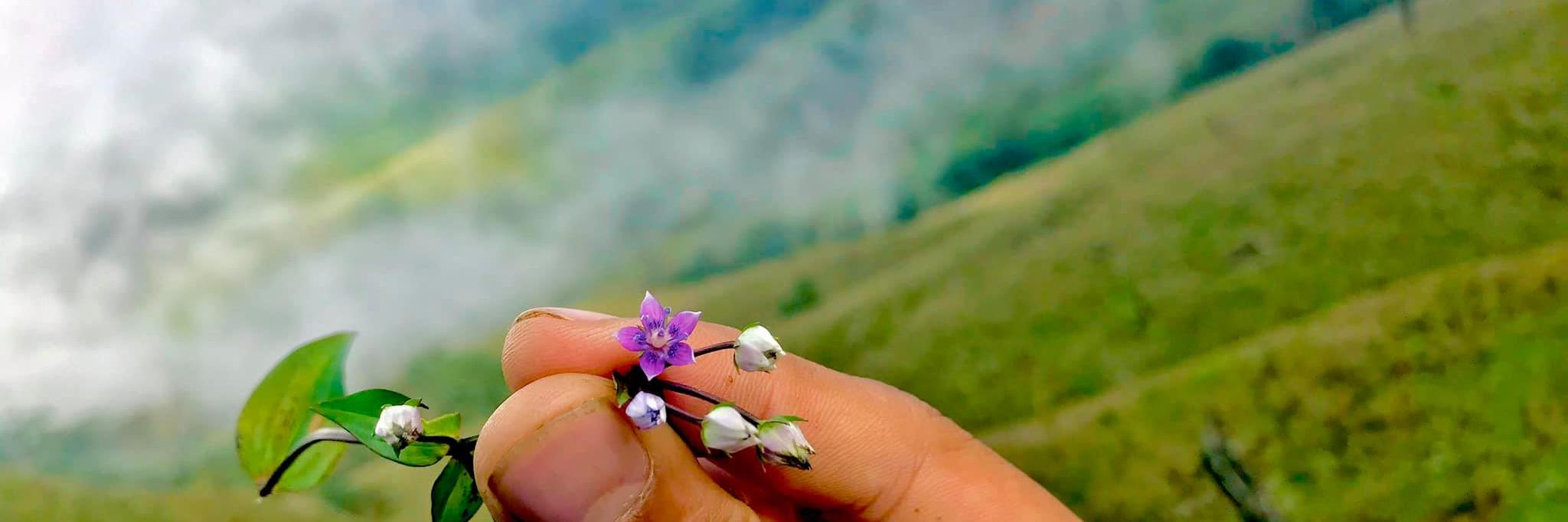 https://gody.vn/blog/thuongbac892402/post/ve-dau-mau-hoa-tim-em-thuong-trekking-dinh-ta-chi-nhu-7573