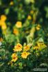 Hoa cỏ mùa xuân ❤️