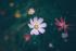 Hoa qua ống kính newber