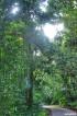NINH BÌNH | Vườn Quốc gia Cúc Phương ngôi nhà của hệ động thực vật