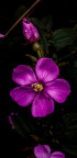 Bông hoa đẹp nhất khi chưa thuộc về ai !
